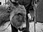 otis gibbs george-and-donkey-brasov-romania.jpg