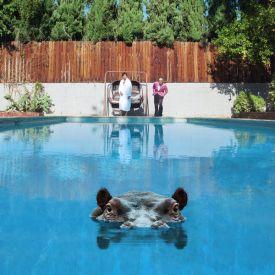 79900-hippopotamus