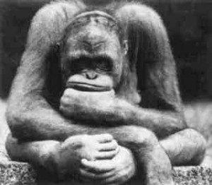 pensatore-scimmia-300x262